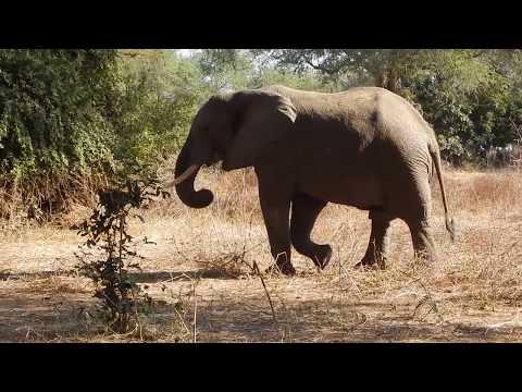 Elephants of the Zambezi Valley