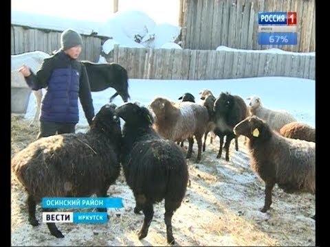 Самый юный фермер Иркутской области. 15-летний Витя из Хокты  мечтает выращивать зерновые