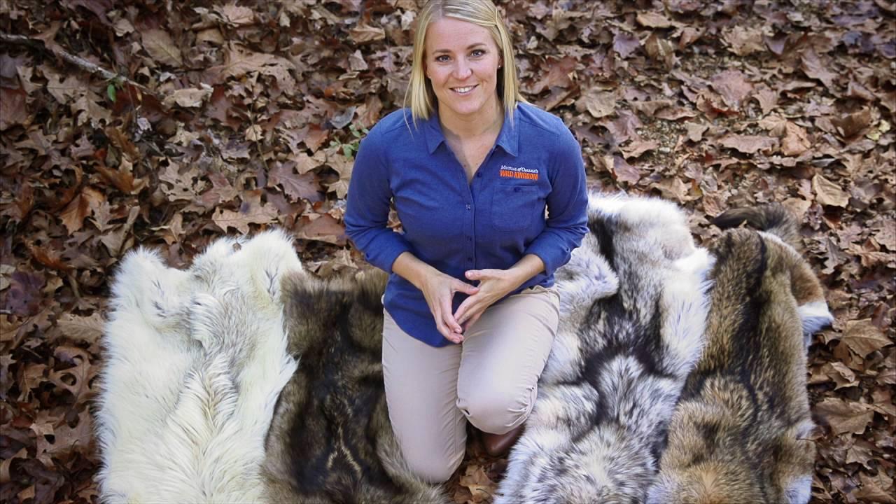 Wolf Fur Coat >> Wild Kingdom Wolves Fur Coat