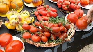 Презентация новых сортов томатов 2018 года (Часть VII)