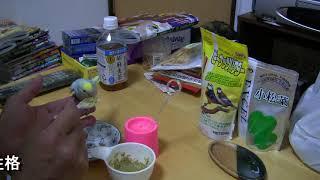 セキセインコのこゆきはスプーンで食べません。迎え入れから2日間食べ...