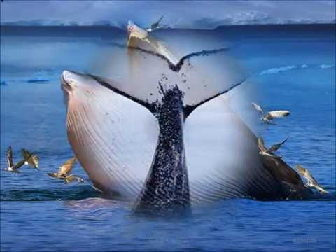 Dolphins and whales photos .Marine ecology . Dr.Shihab A. Salman