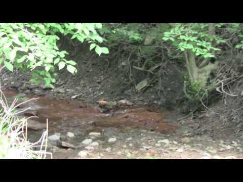 Acid Mine Drainage in Green Tree PA