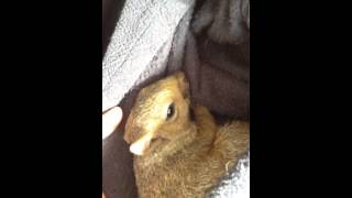 Mr squirrel likes to cuddle