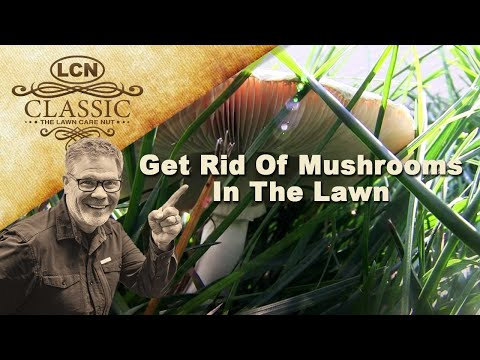 Get Rid Of Mushrooms In The Lawn