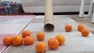 Berat Portakalları Tünelden Kaydırdı. Eğlenceli Çocuk Videosu