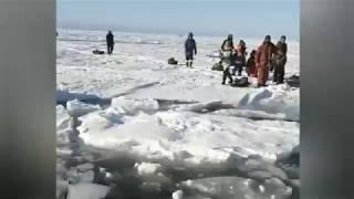 Не Пингвины на оторванной льдине