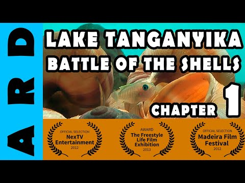 Battle of the Shells - Documentary series on shelldwelers from Lake Tanganyika - Part 1 of 7