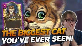 The BIGGEST CAT YouTube Has Ever Seen! | Hearthstone Battlegrounds | Savjz