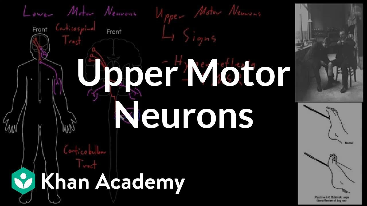 Upper Motor Neurons Organ Systems Mcat Khan Academy Youtube