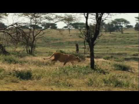 Di Lion - Dub Revolution (HD)