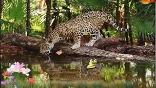 Настя среди диких #Животных+Красивая природа.