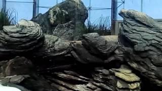 Дельфины (лиссабонский океанариум)