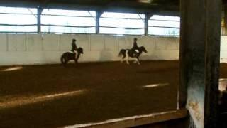 Ponies Trottin circle