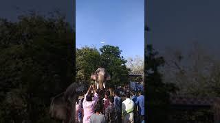 THECHIKOTTUKAVU RAMACHANDRAN HIGHEST ELEPHANT IN KERALA