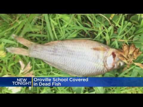 WEIRD WEATHER: Fish rains down from clouds on Elementary school in CA