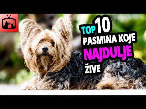 🐕 Psi Koji Najduže Žive – TOP 10 Pasmina Pasa Koje Žive Najduže!