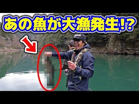ダムにバス釣りに来たらあの魚が大漁発生!!