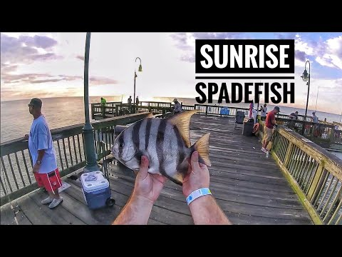 How To Catch BIG Spade Fish From The Pier! - Hampton, VA (buckroe Pier)
