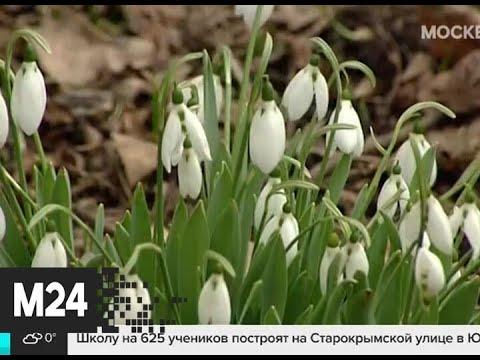 Москвичам пообещали раннюю и теплую весну - Москва 24