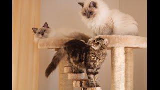 3 new Kittens meet 2 resident Cats