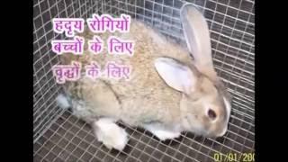RABBIT FARMING  IN INDIA || भारत में खरगोश पालन || KISHAN RABBIT FARMS