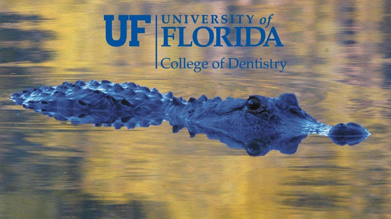 Can I get into the University of Florida?