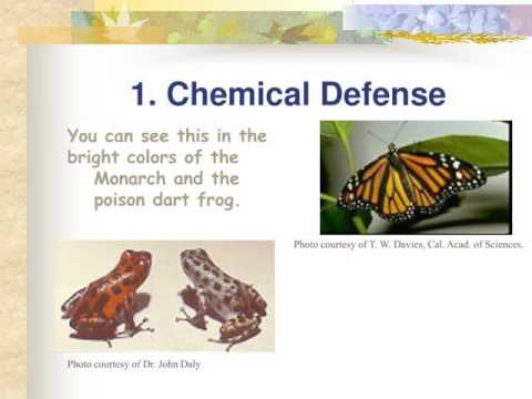 Animal Defense Against Predators Youtube