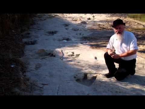 Darwin and some real dinosaur footprints