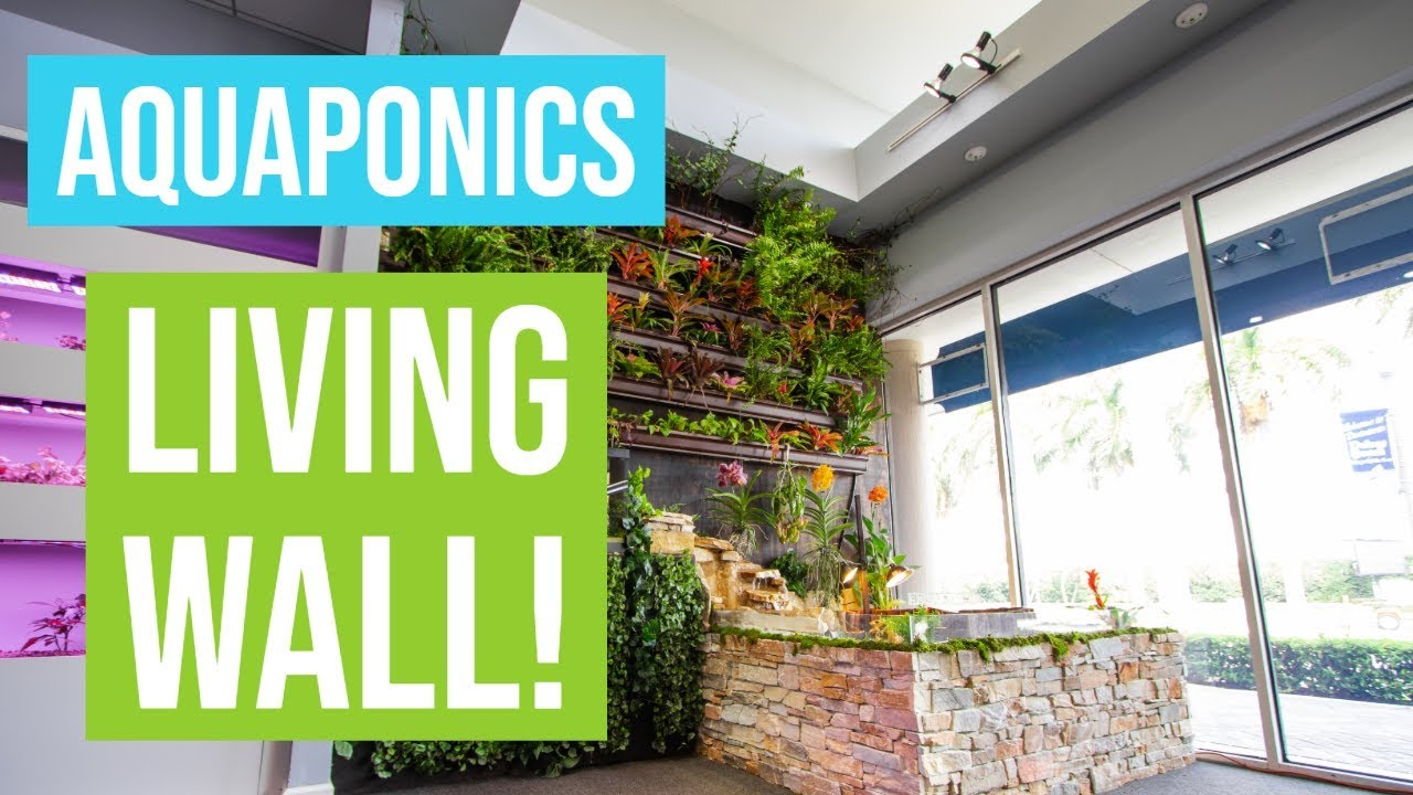 BUILDING AQUAPONICS LIVING WALL
