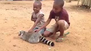 شاهد هذا الحيوان ماذا يفعل( سبحان الله)