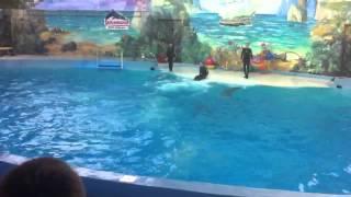 Сочи. Шоу дельфинов. Потрясающее зрелище!