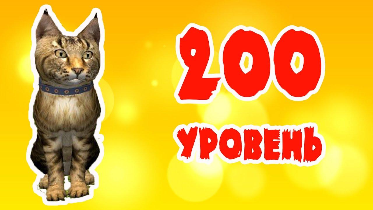 Достигаем уровня 200 в игре Симулятор кота и кошки