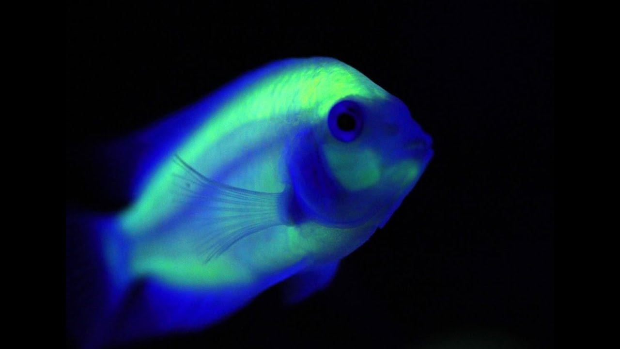 header fish