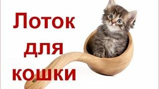 Лоток для кошек. Закрытый лоток для кошек. Наполнитель для туалета для кошек.