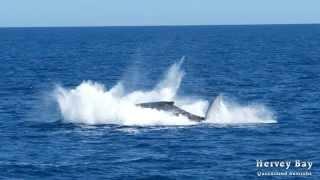 Humpback Whales TV Ad 7 Thumbnail
