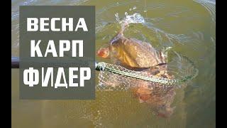 Первый весенний карп на фидер Олег Квициния