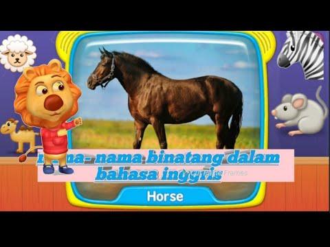 33++ Nama nama hewan jinak dalam bahasa inggris dan artinya terupdate