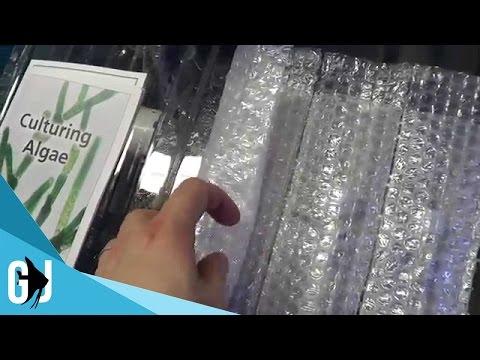 #291: Freshwater Algae Culture, Daphnia, Starting Seeds - Update Monday