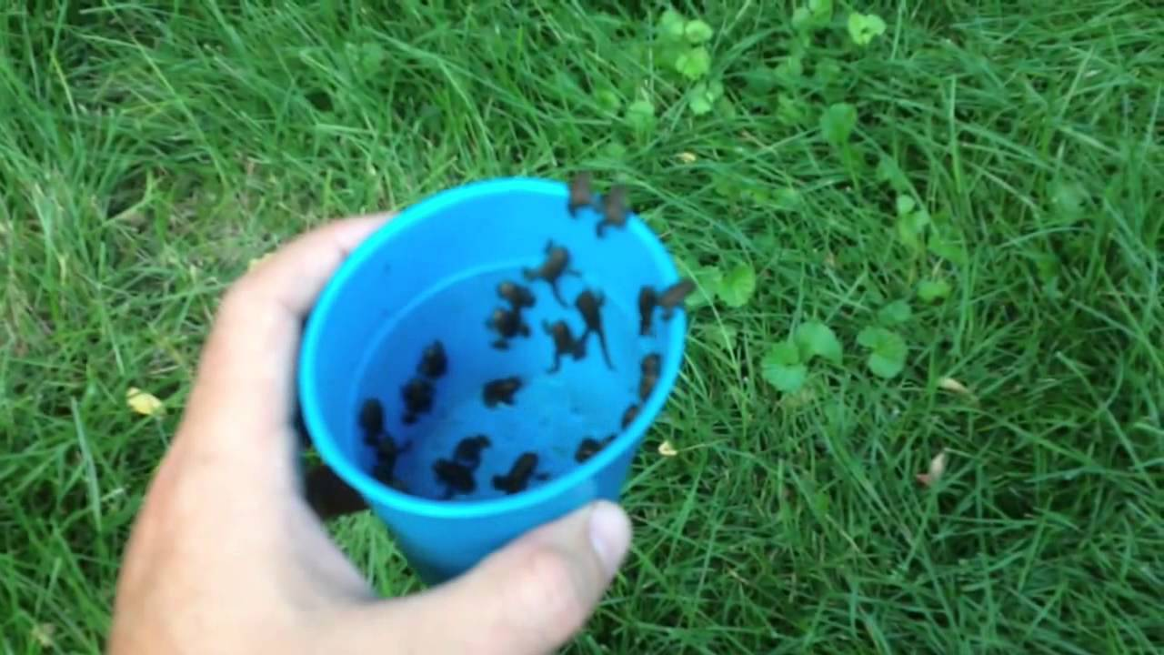 How To Get Toads In Your Garden Garden Ftempo