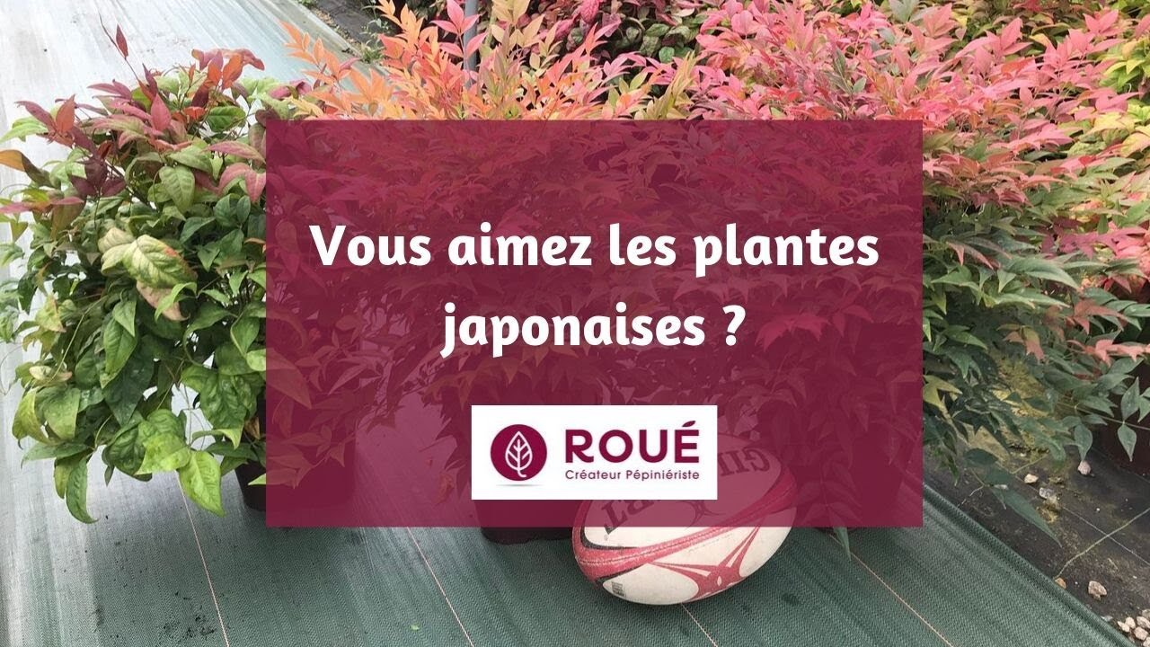 Photo Jardin Zen Chez Particulier jardin japonais, jardin zen : nos suggestions de plantes