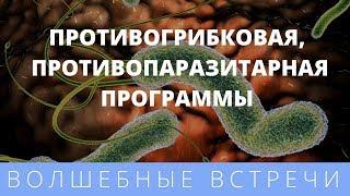 Елена Бахтина. Очищение организма. Противогрибковая,  противопаразитарная программы