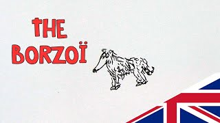 borzoi dog top fact with drawing !  story of the russian wolfhound breed with facts   dog 101