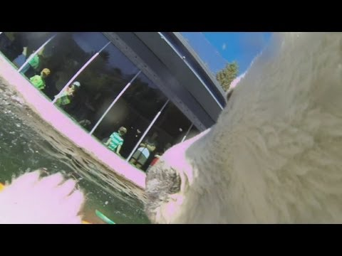 Polar bear's collar camera captures unique view inside Oregon Zoo