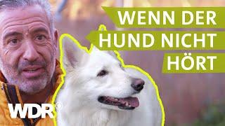 Dem Hund konsequent Grenzen aufzeigen | Hunde verstehen (12) | WDR