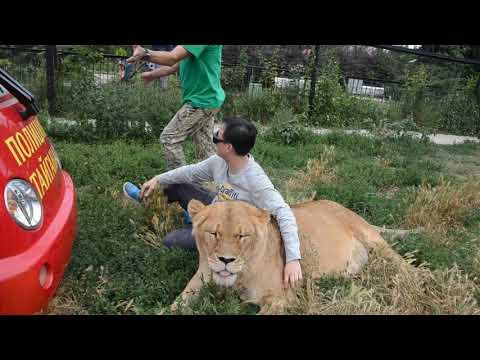 Гость из Гонконга приехал в Тайган ко львам !