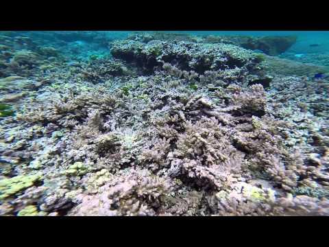 Steve Palumbi and Megan Morikawa Study Coral Reef Damage in American Samoa