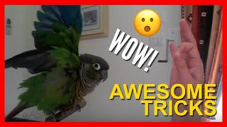How to Train your Bird to do Awesome Tricks Tutorial!