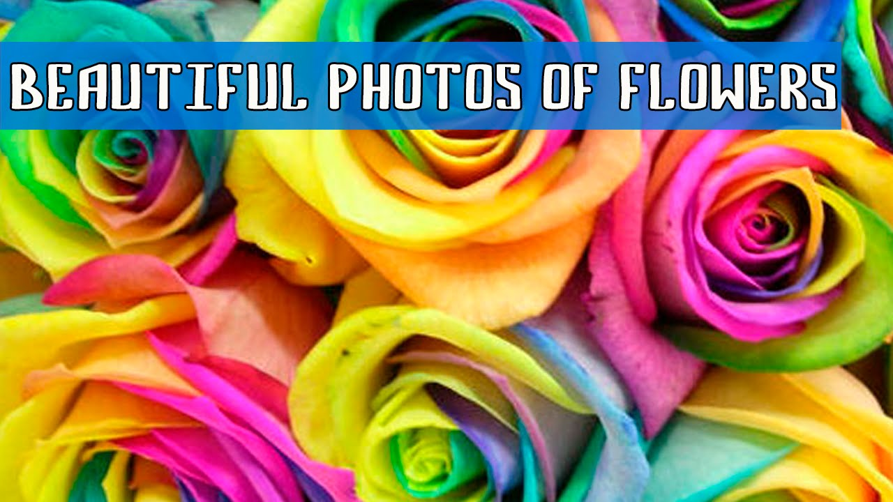 Beautiful photos of flowers youtube beautiful photos of flowers izmirmasajfo