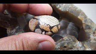 VIDEO VIRAL...Ambil batu mustika dari kepala ULAR...nyata loh